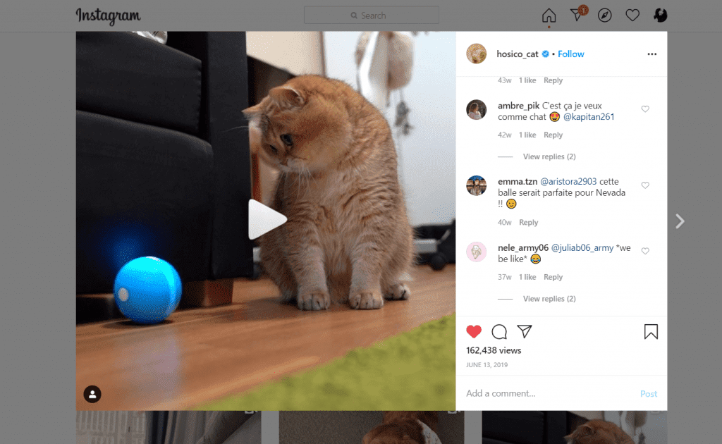 sample review cat influencer
