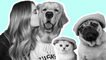 pet influencers
