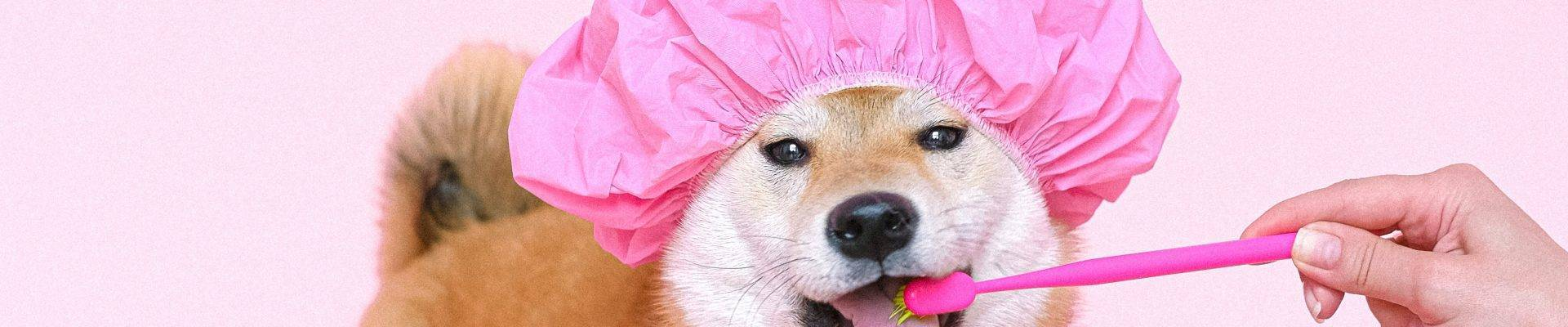 top pet blog and influencers