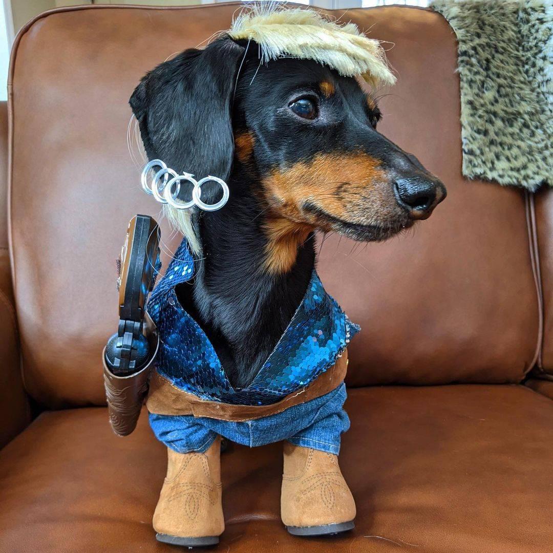 crusoe_dachshund